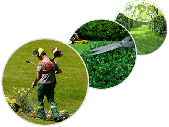 Smns sarl nettoyage professionnel entretien des espaces for Entretien des jardins et espaces verts